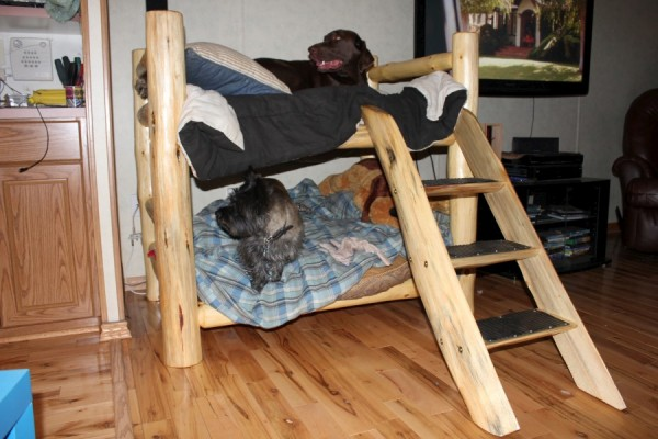 Doggy Bunk Bed-900